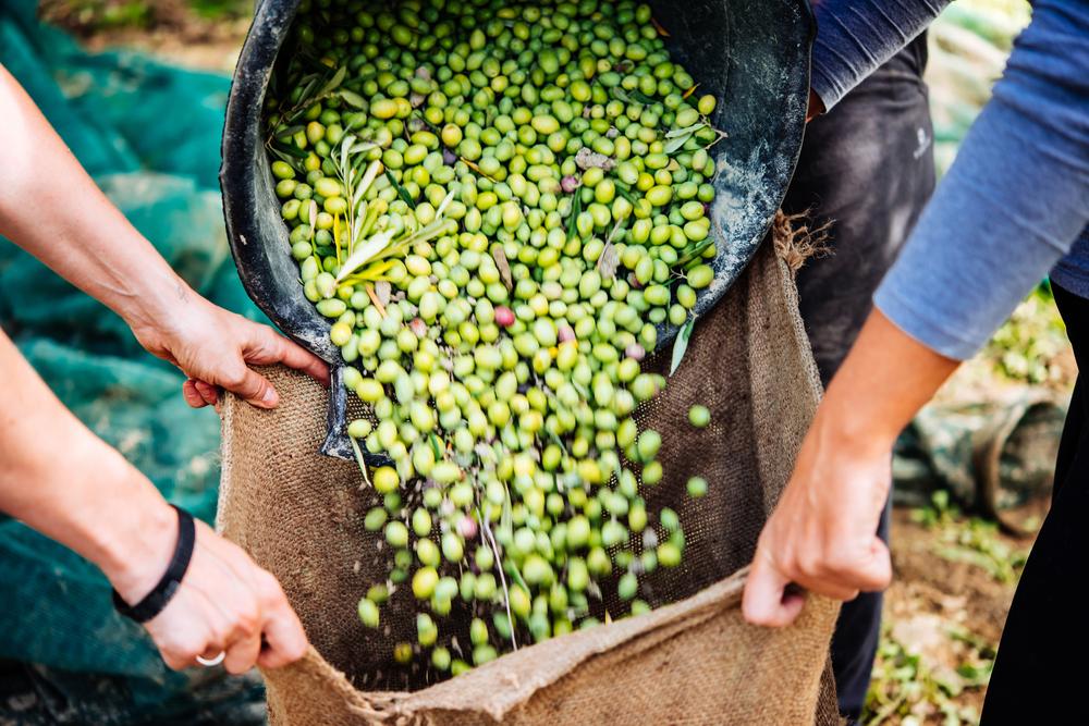 italy olives