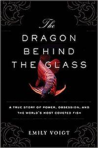 indonesia-dragonfish