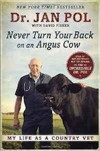 dutch-cow