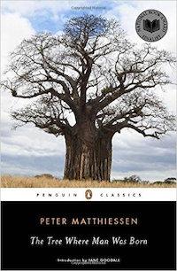 kenya-tree